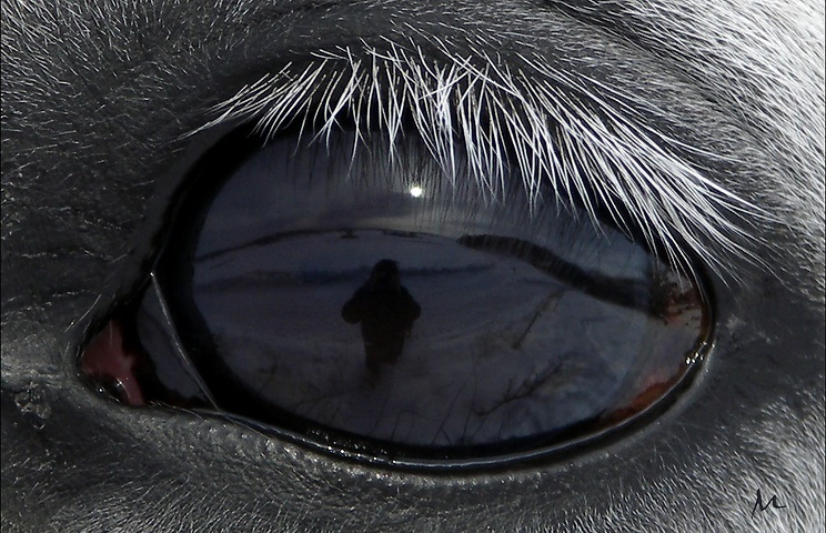 Tintin eye
